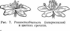 гетеростилия