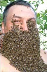 как стать пчеловодом?