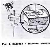 как засушить пчелу